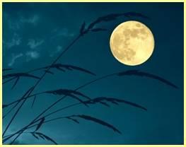 น้ำค้างมองพระจันทร์